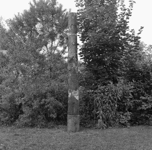 Trees Reconstruction